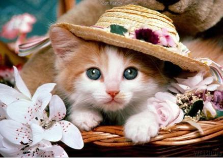 Cute-Cat-16
